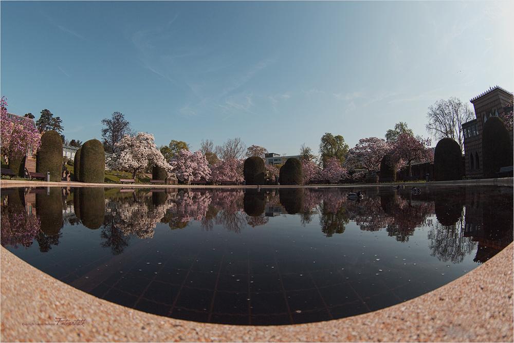 ~ Magnolienblüte in der Wilhelma 2 ~