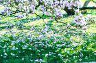 magnoliengrüße