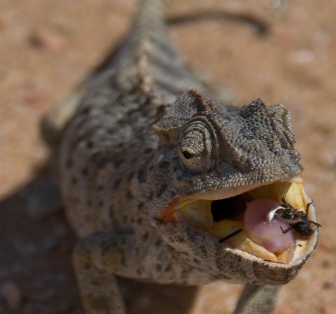 Mahlzeit (Namibia little big 5)