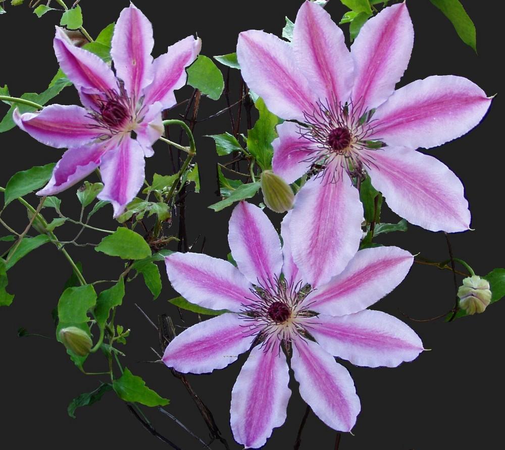 Mai Blüten 01