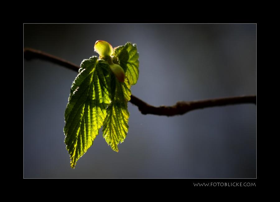 Mai Grün