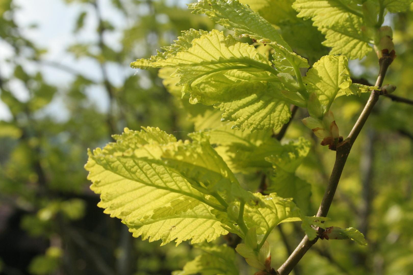 Mai-Grün