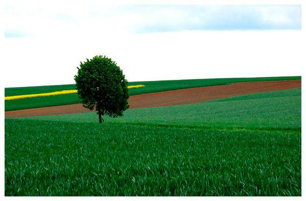 Mai-Landschaft