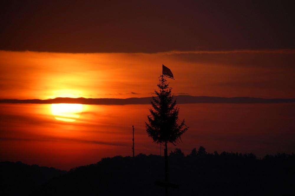 Maibaum am Morgen