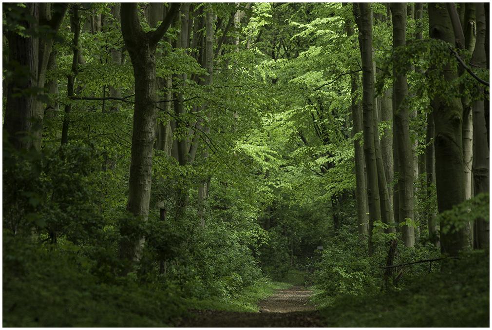 Maiengrüner Wald