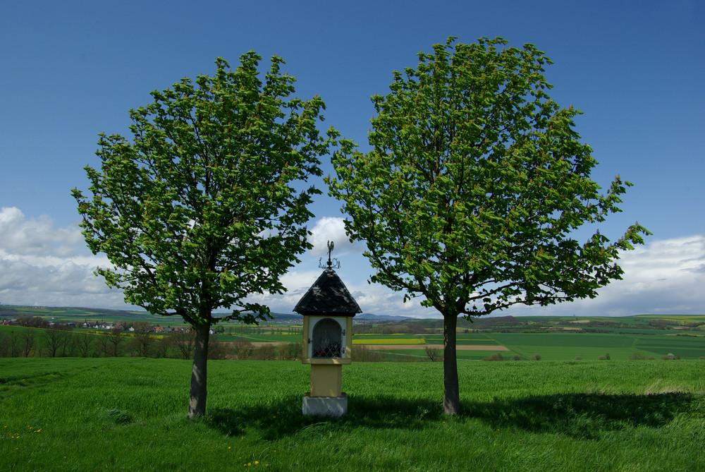 Maifeldlandschaft (Vordereifel)