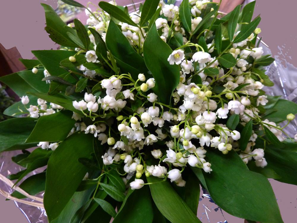 maigl ckchen upload 2000 foto bild pflanzen pilze flechten bl ten kleinpflanzen. Black Bedroom Furniture Sets. Home Design Ideas