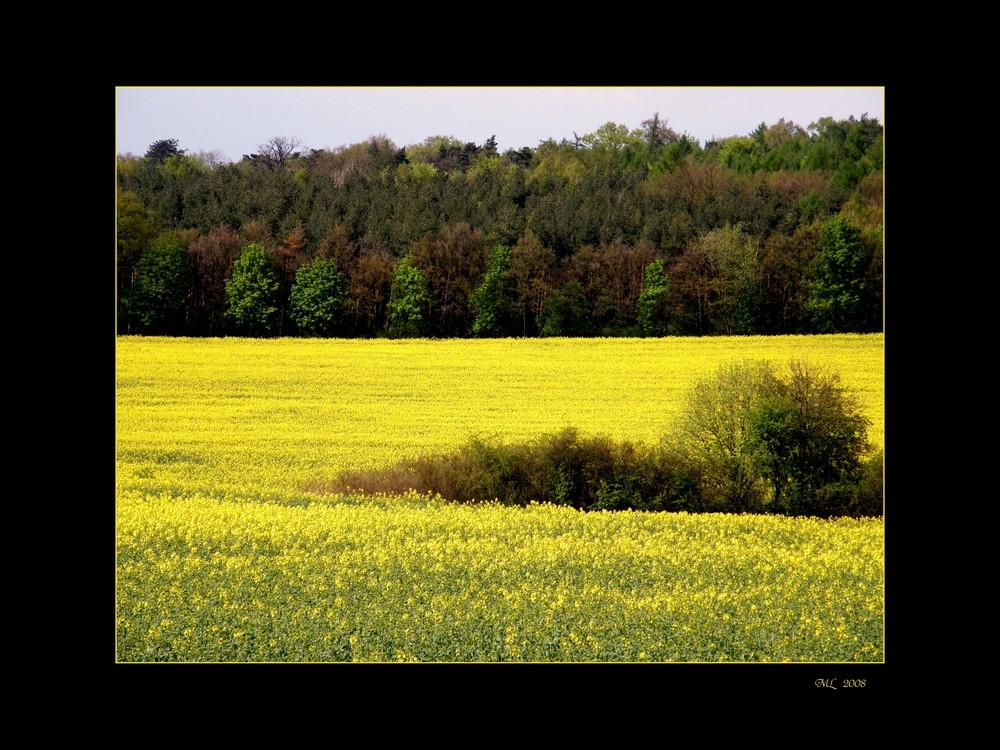 Maigrün (und -gelb)