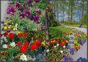 [Mainau 7] *Blumengarten* by Stephan K.