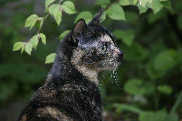 Mai(ne)-Katze