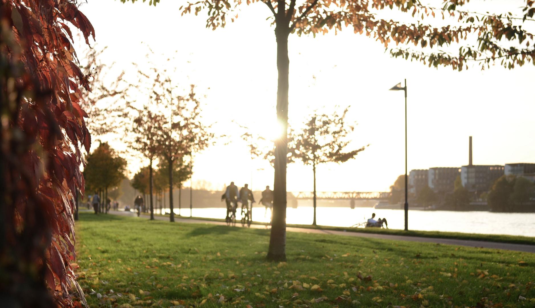 Mainufer im Herbst