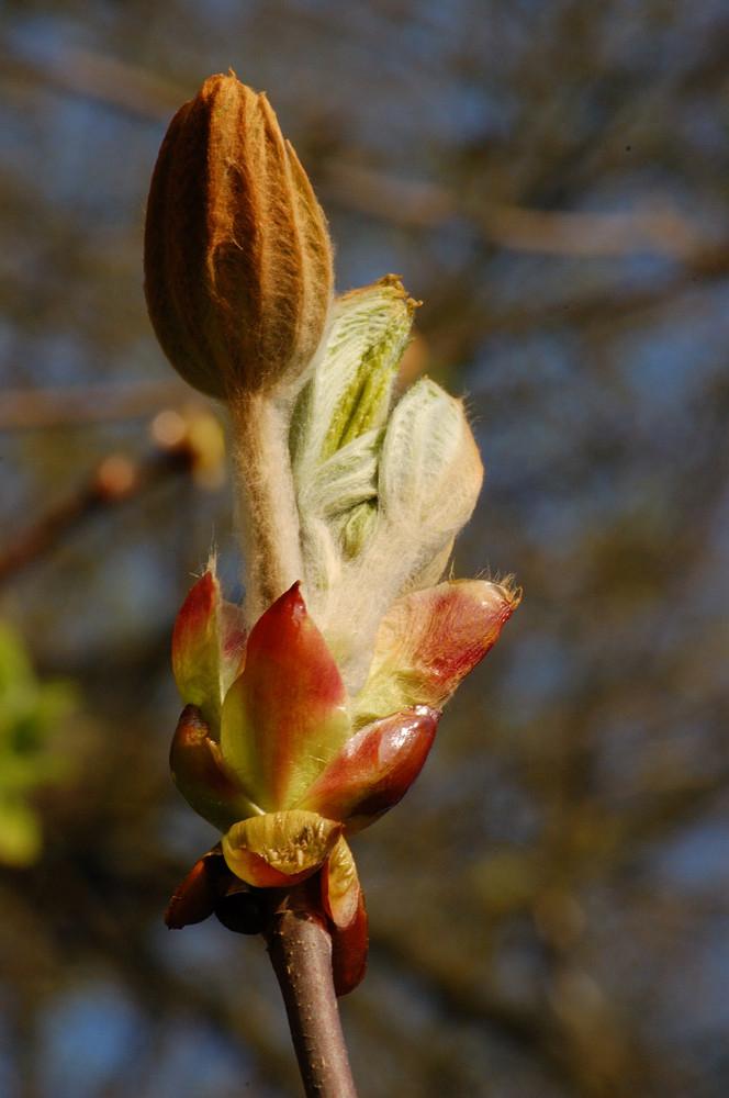 mais, c'est le printemps !