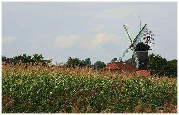 Maisanbau, oder der Untergang .....