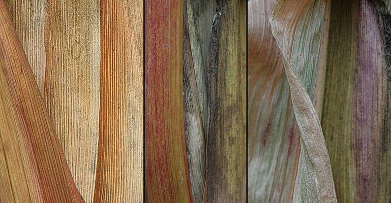 Maisblätter-Triptychon