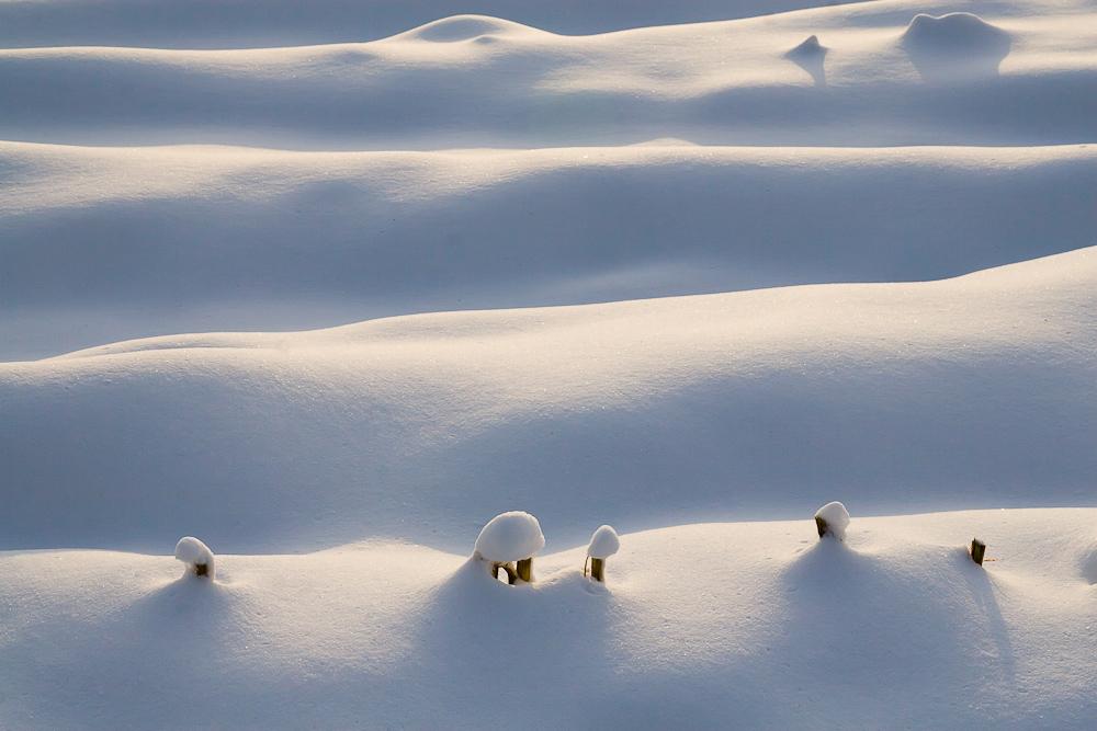 Maisfeld - Winter - Landschaft
