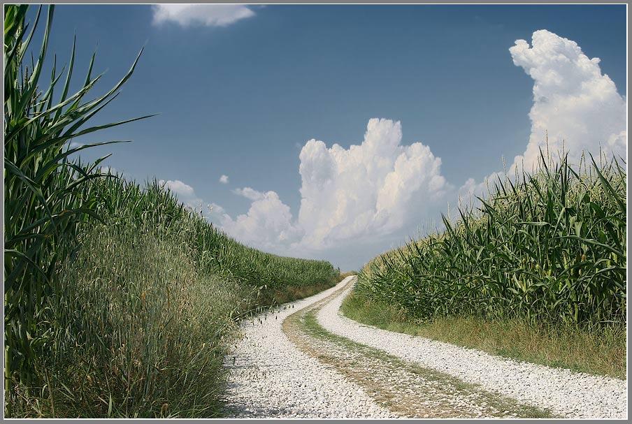 Maisfelder -wälder