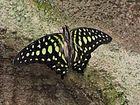 Maison de papillon 3