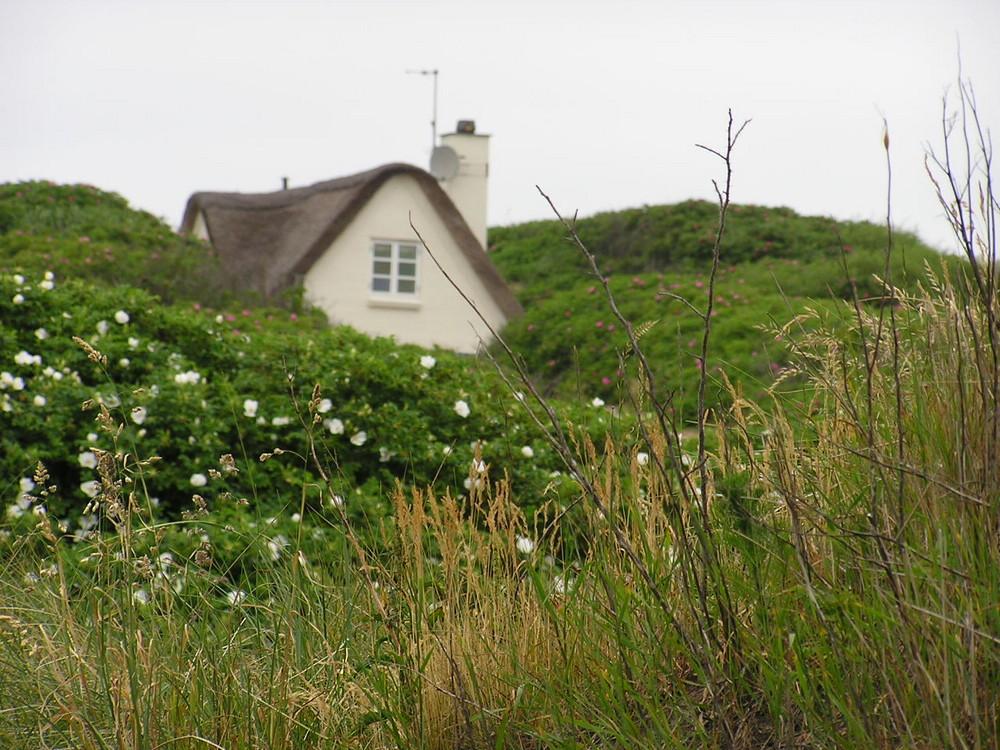 Maisonnette dans les dunes fleuries