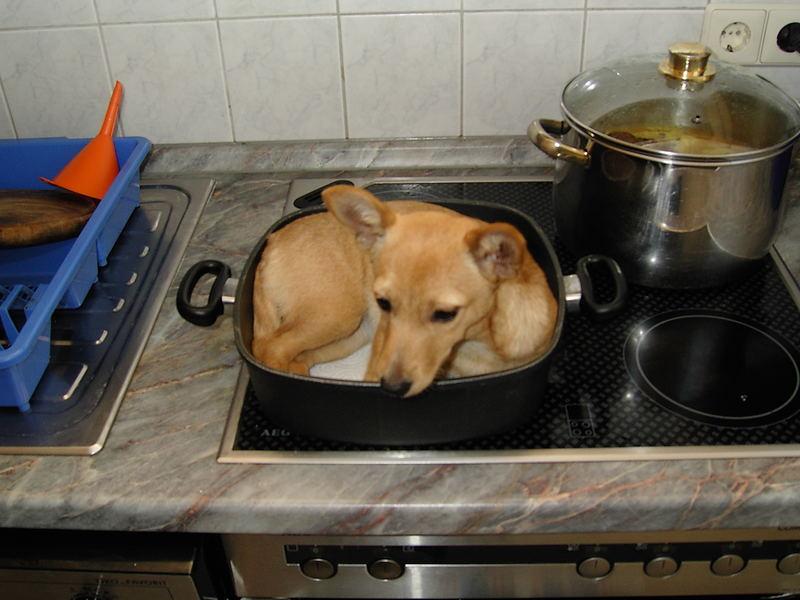 Maja-Hund wird nicht gebraten