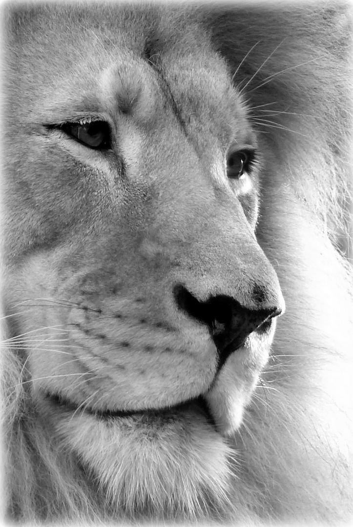 Majestätische Gelassenheit