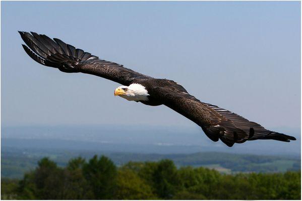 majestätischer Flug