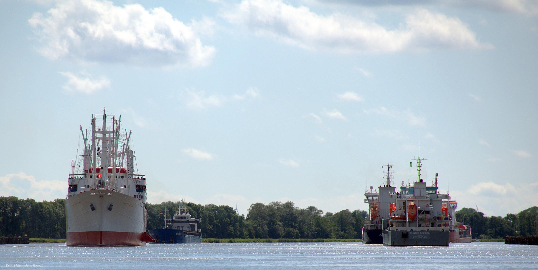 """Majestetisch ; Der weiße Schwan des Südatlantik"""" im Nord-Ostsee-Kanal"""