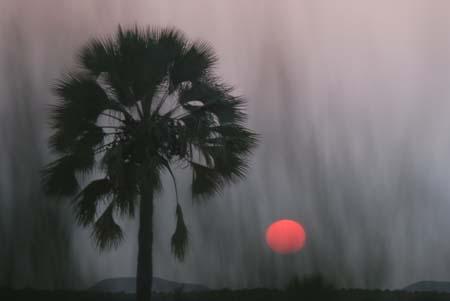 makalani palme