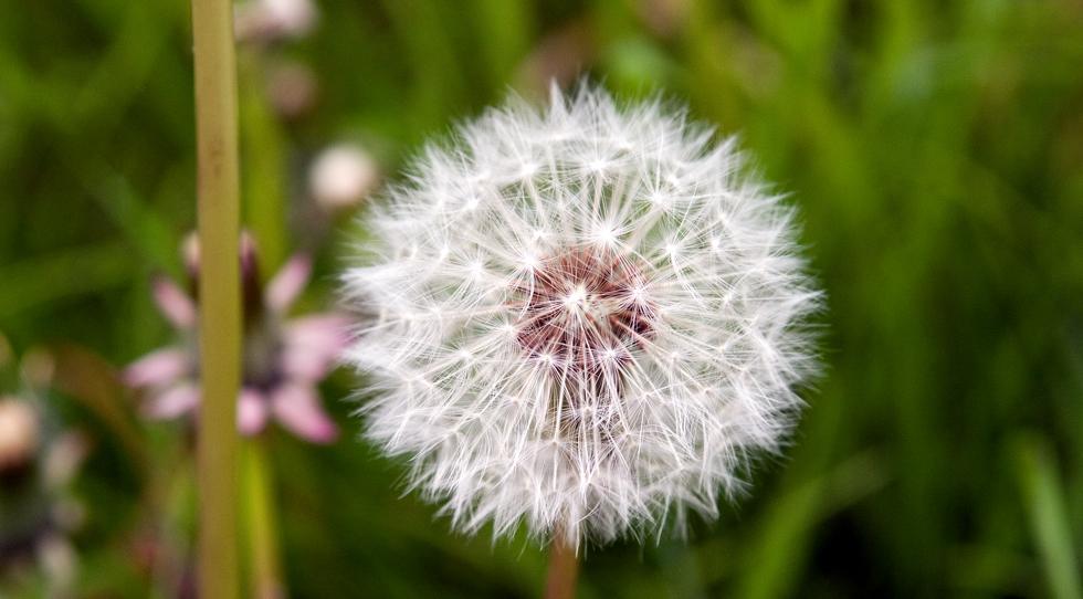 ~Make a Wish !~