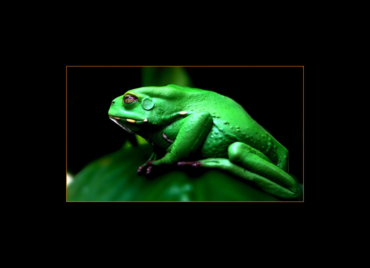 Maki(frosch)
