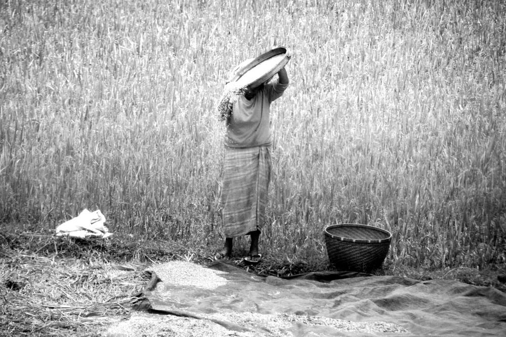 making rice