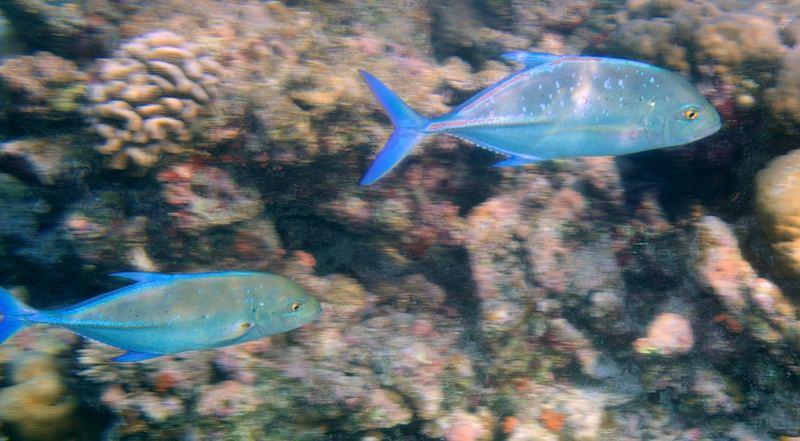Makrellen im schnellen Vorbeischwimmen ;-)
