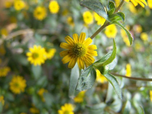 Makro-Blumen