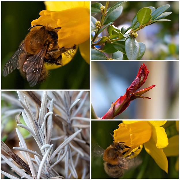 Makro - Frühling