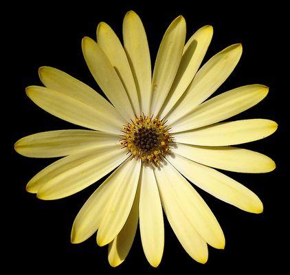 makro in gelb