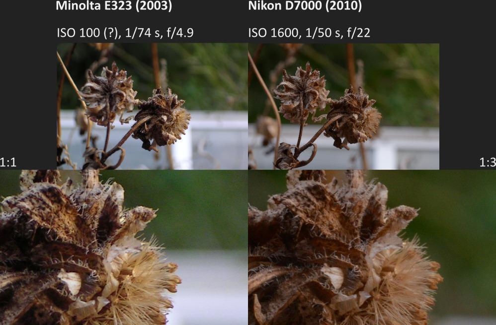 Makro: Minolta E323 vs Nikon D7000