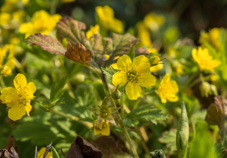 Makro mit gelben Blüten!