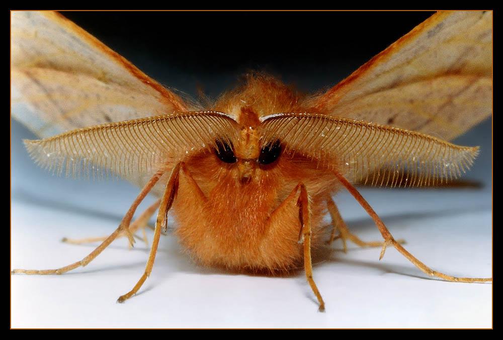 makro motte foto bild tiere wildlife insekten. Black Bedroom Furniture Sets. Home Design Ideas