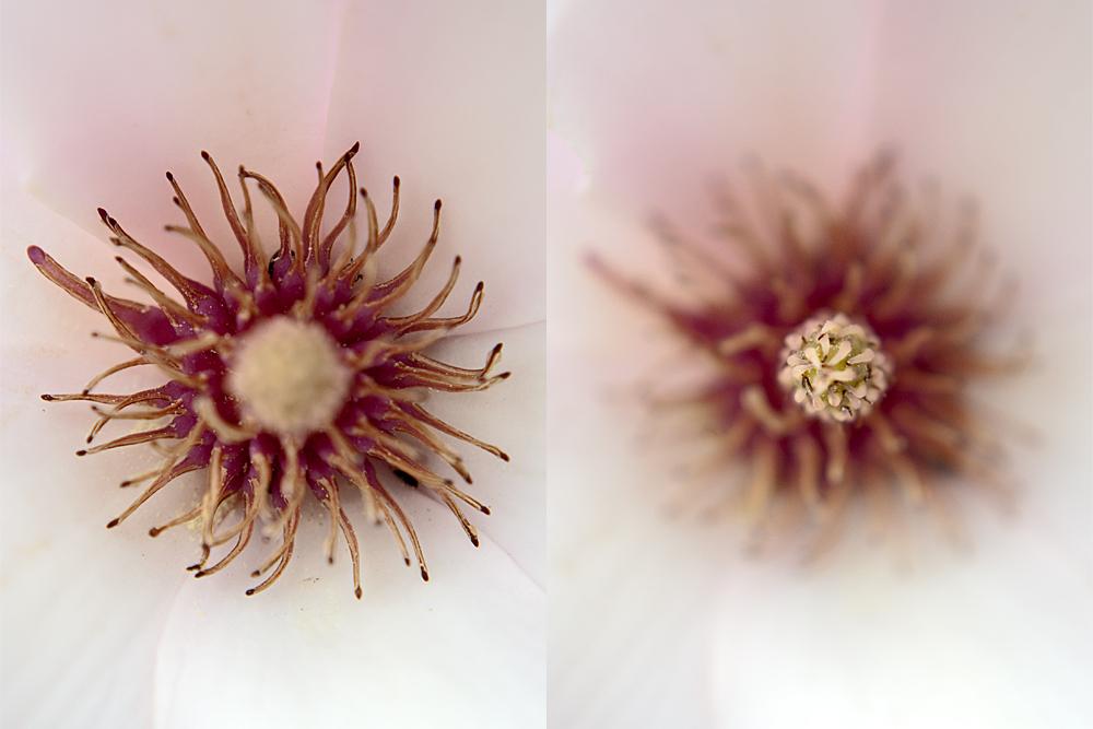 Makro(versuch) einer Magnolienblüte