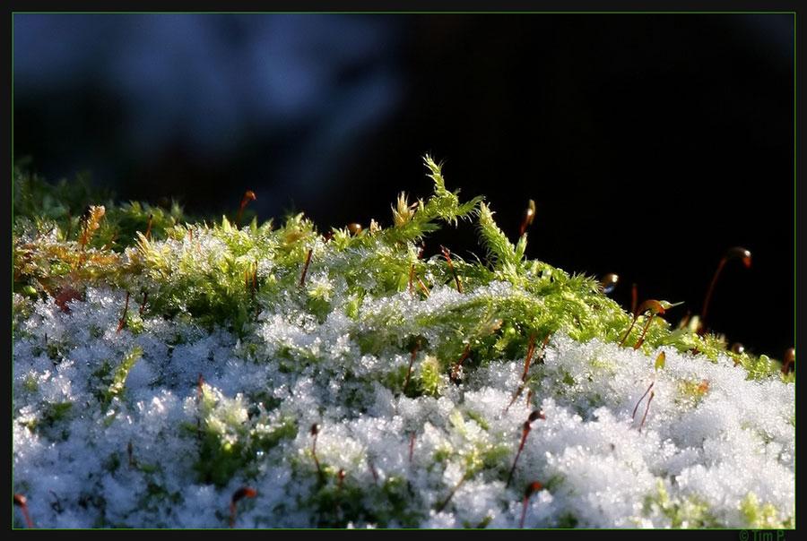 Makrowald im Schnee