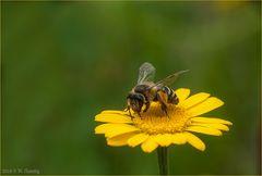 Mal ein Bienchen