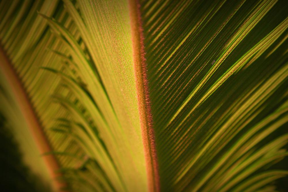 mal eine andere ansicht einer palme....