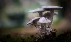 Mal eine Pilzfamilie