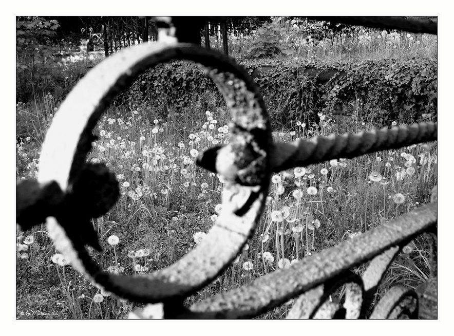 *...mal perspektivisch durch nen Zaun geguckt ;o) ...*