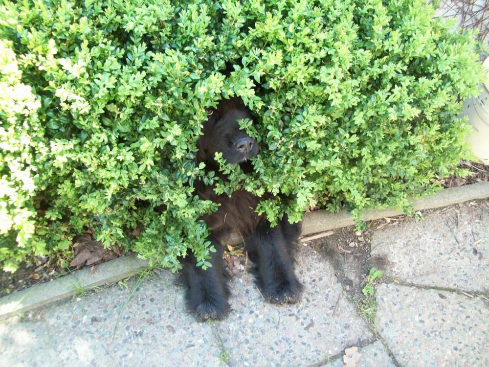 Mal sehen ob ich mich heute vor dem Spaziergang drücken kann!