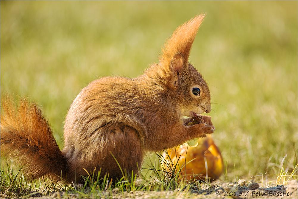 mal sehn, wie die Äppel schmecken....