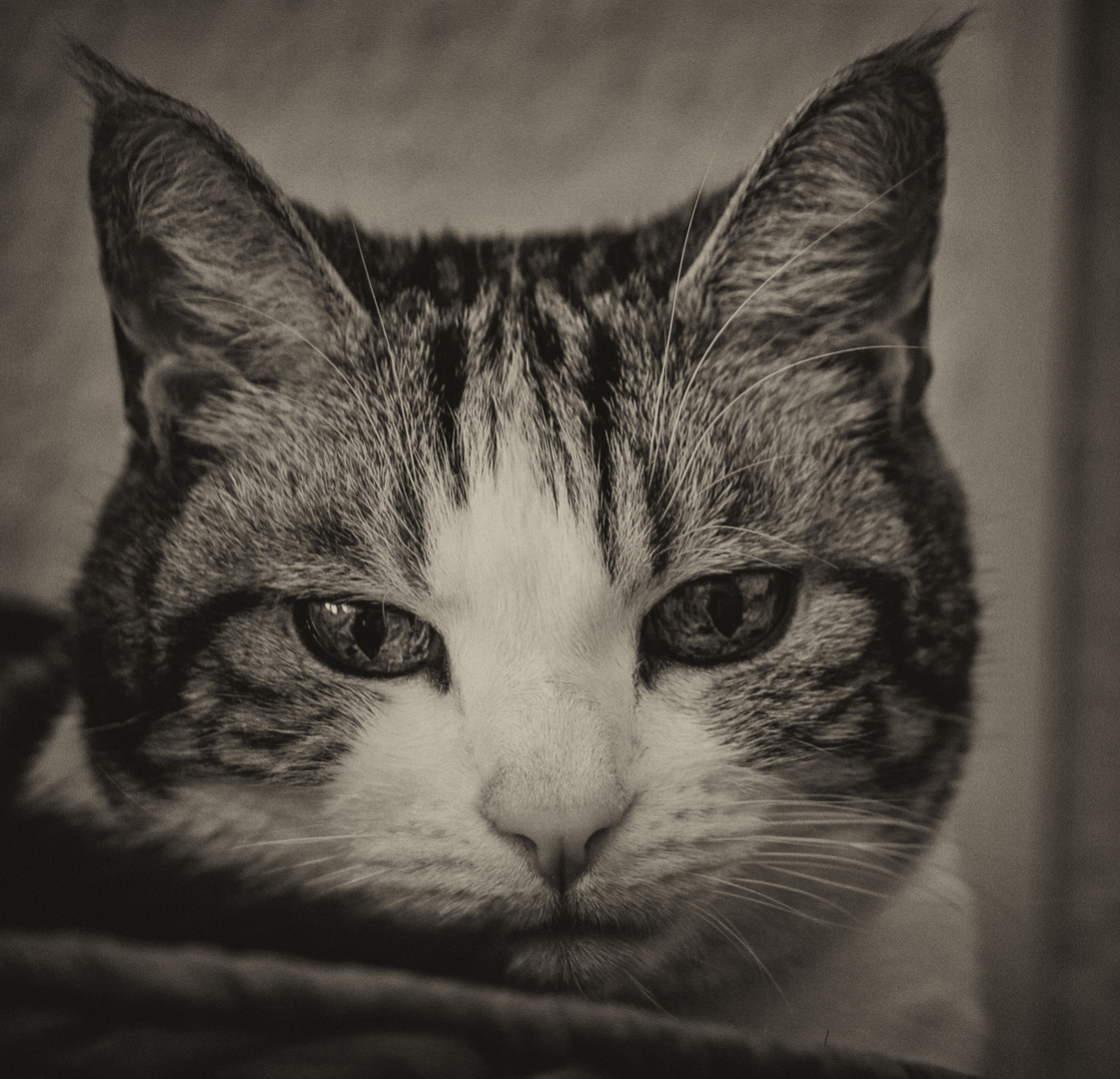 Mal wieder eins von unserem lieben Charly the cat...