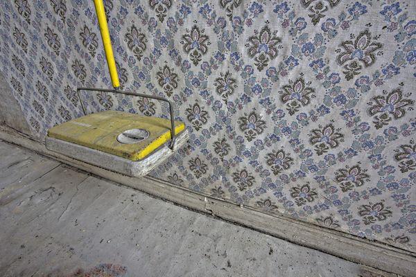Teppichdackel  Teppichdackel Fotos & Bilder auf fotocommunity