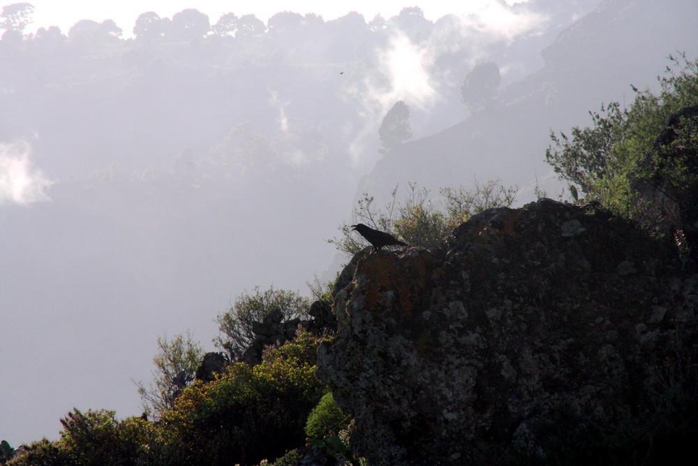 Mal wieder Nebel im Hintergrund