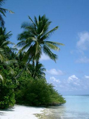 Malediven - Vilamendhoo I