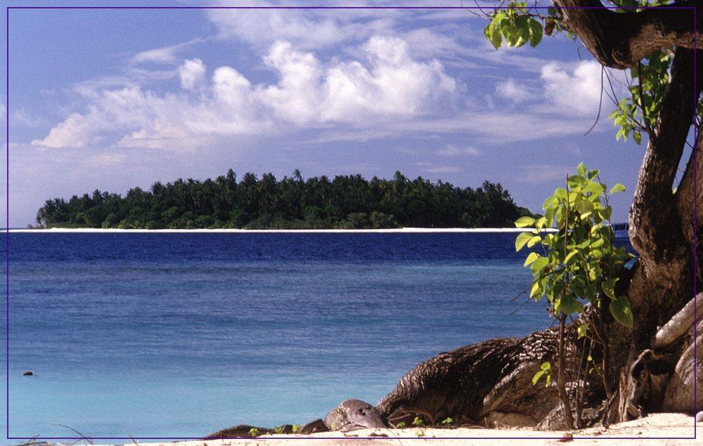 Maledivisches Stillleben (2)